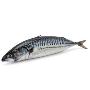 focus-ratings-fish