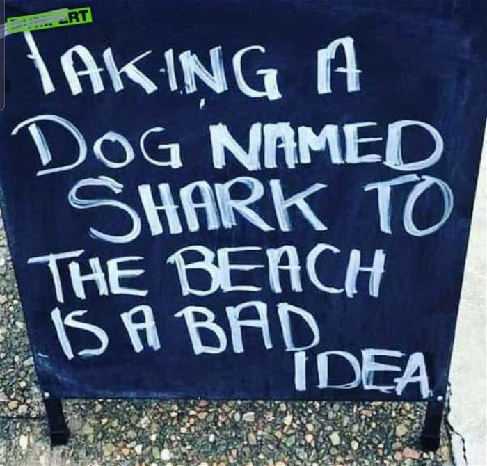 a-dog-named-shark