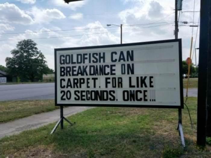 goldfish-can-breakdance