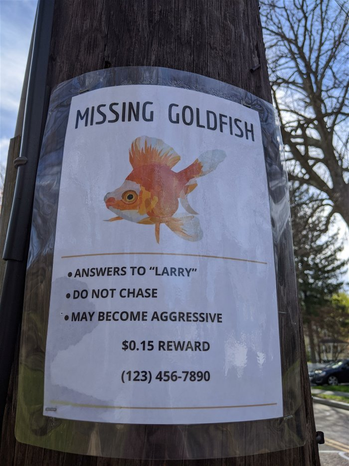 missing-goldfish