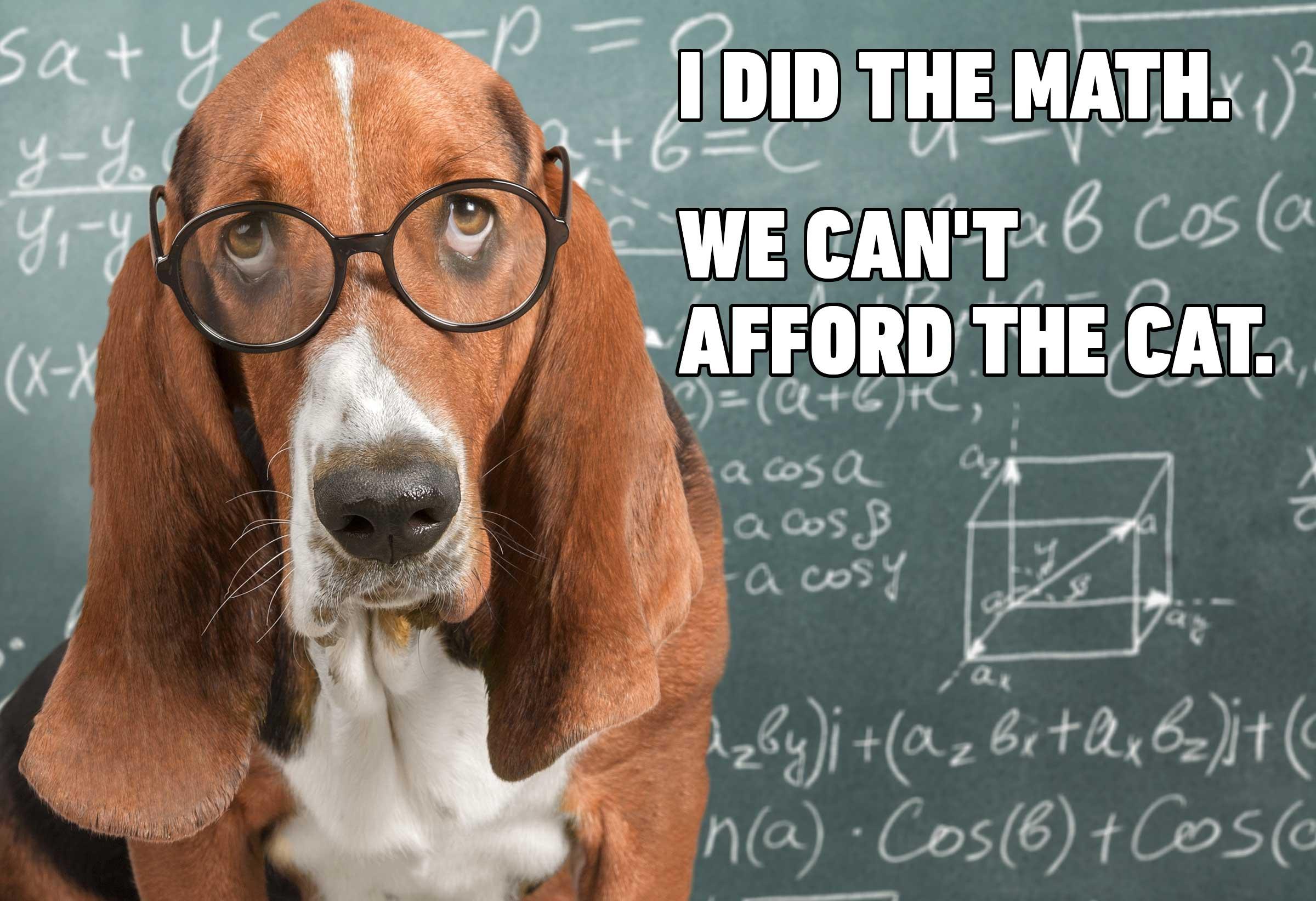 13-Hilarious-Dog-Memes