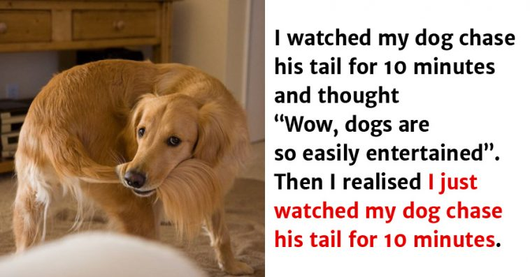 20-hilarious-dog-tweets-that-are-impawsible-not-to-laugh-at-758x397