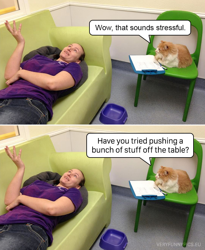 funny-pictures-cat-as-a-psychologist
