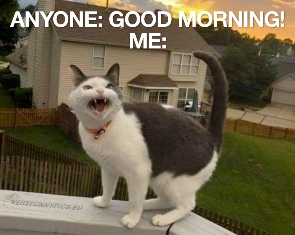 funny-pictures-good-morning-cat